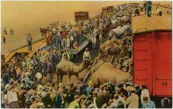 Circus Train, Sarasota
