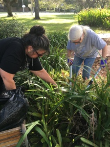 The Historical Society of Sarasota County had a Clean-Up Day